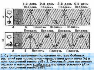 1. Суточные изменения положения листьев бобовых растений при нормальном черед