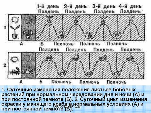 1. Суточные изменения положения листьев бобовых растений при нормальном черед...