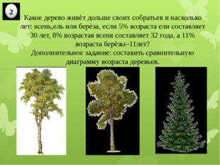 Какое дерево живѐт дольше своих собратьев и насколько лет: ясень,ель или берѐ