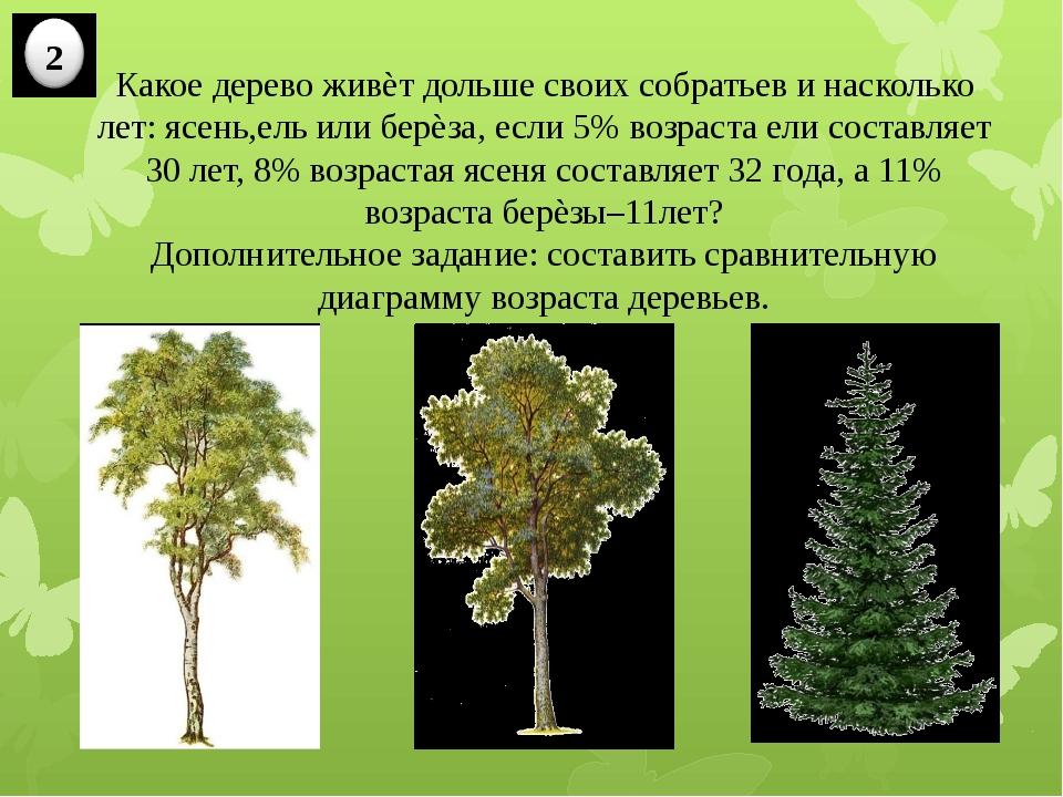 Какое дерево живѐт дольше своих собратьев и насколько лет: ясень,ель или берѐ...