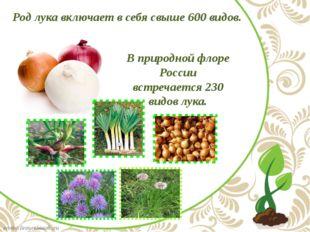 Род лука включает в себя свыше 600 видов. В природной флоре России встречает