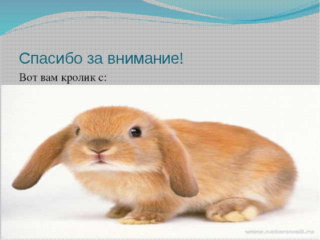 Спасибо за внимание! Вот вам кролик с: