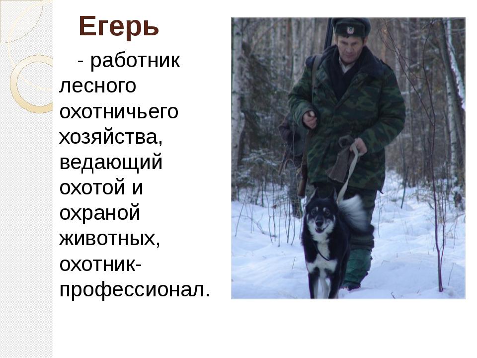 Егерь - работник лесного охотничьего хозяйства, ведающий охотой и охраной жив...