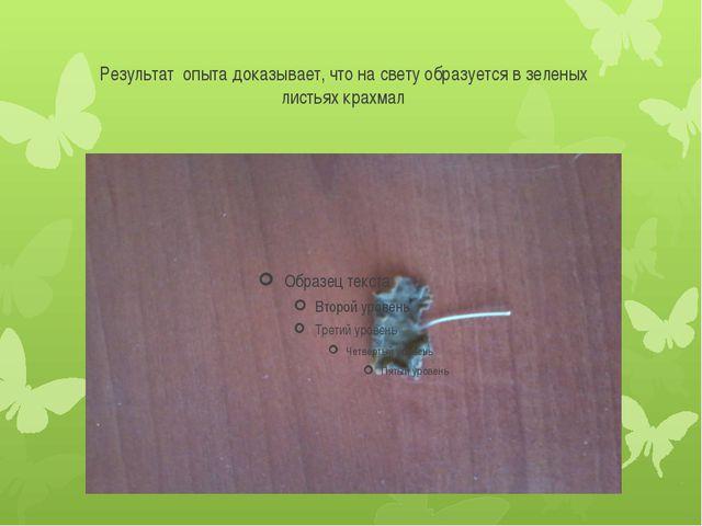 Результат опыта доказывает, что на свету образуется в зеленых листьях крахмал