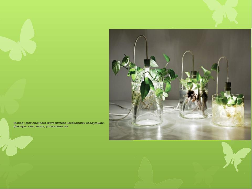Вывод: Для процесса фотосинтеза необходимы следующие факторы: свет, влага, уг...