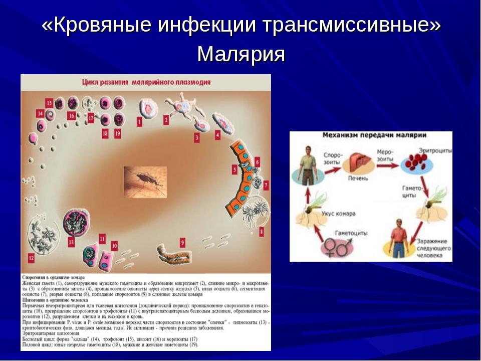 «Кровяные инфекции трансмиссивные» Малярия