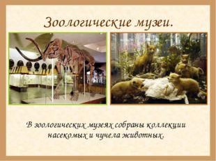 Зоологические музеи. В зоологических музеях собраны коллекции насекомых и чу