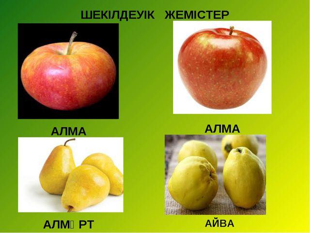 ШЕКІЛДЕУІК ЖЕМІСТЕР АЛМА АЛМА АЛМҰРТ АЙВА