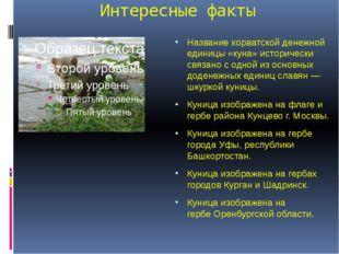 Интересные факты Названиехорватской денежной единицы «куна» исторически связ