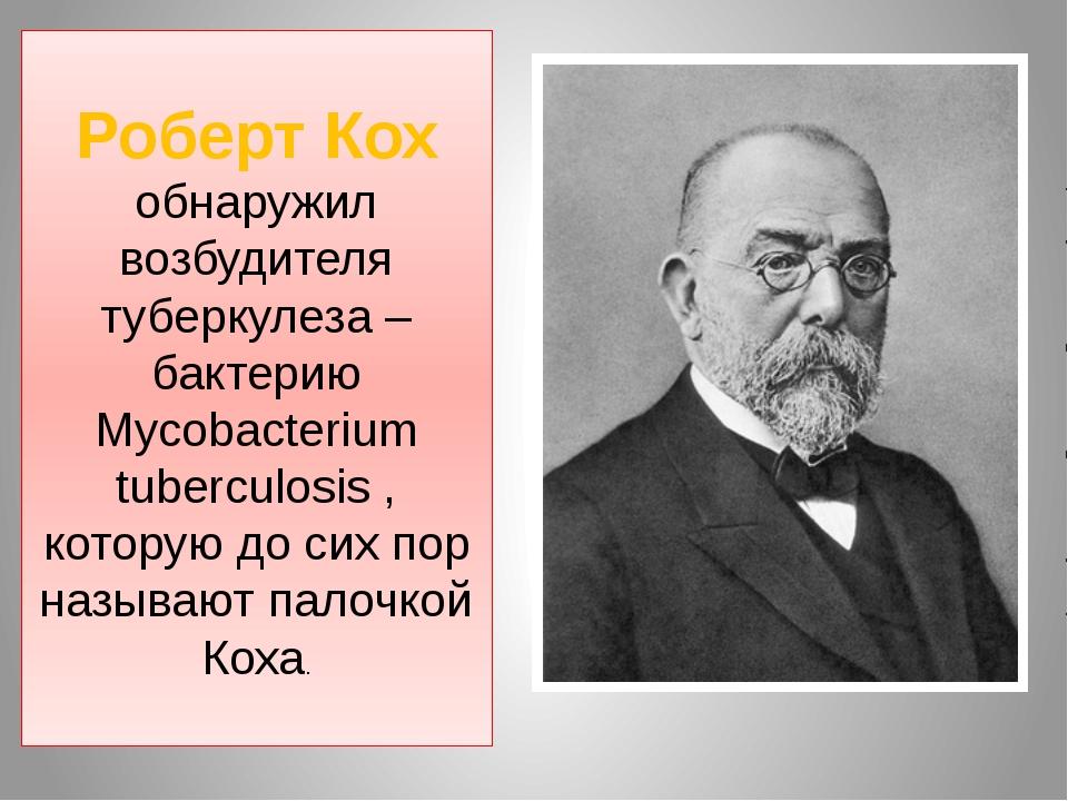 Роберт Кох обнаружил возбудителя туберкулеза – бактерию Mycobacterium tubercu...