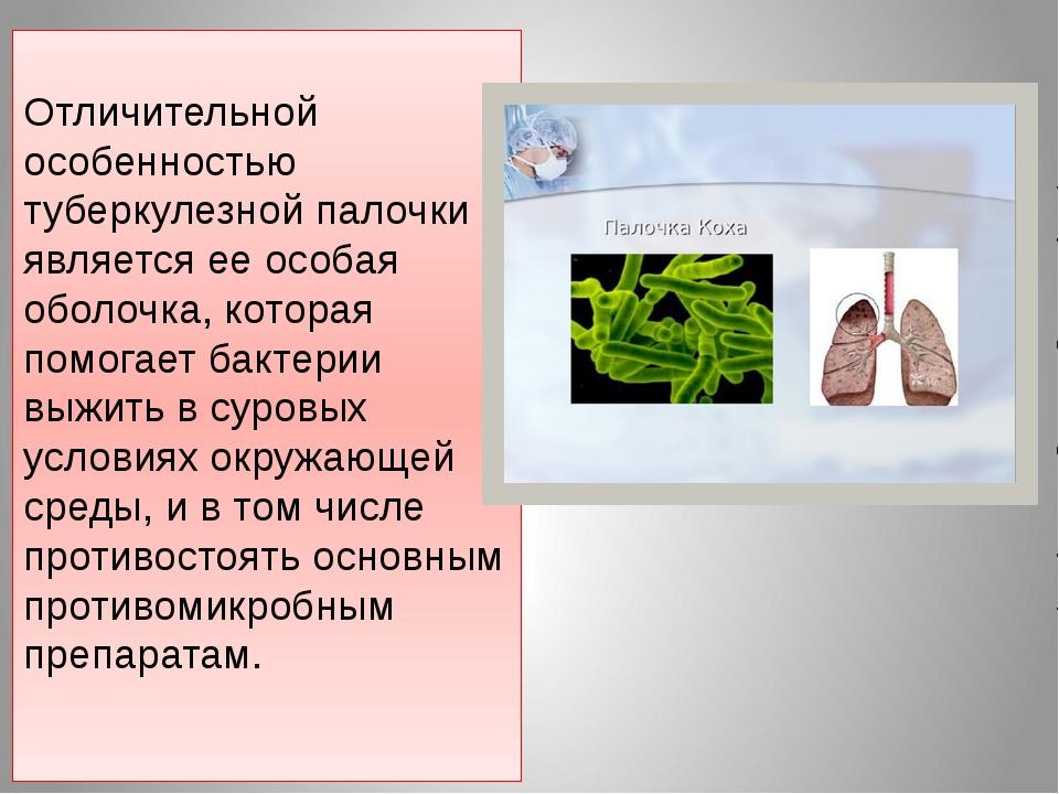 Отличительной особенностью туберкулезной палочки является ее особая оболочка,...