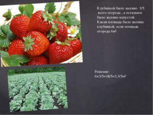 Клубникой было засеяно 3/5 всего огорода , а остальное было засеяно капустой.