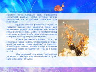 Организация муравьиной семьи сложна, но работает четко. Большую часть мурав