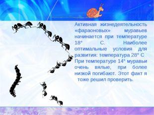 Активная жизнедеятельность «фараоновых» муравьев начинается при температуре
