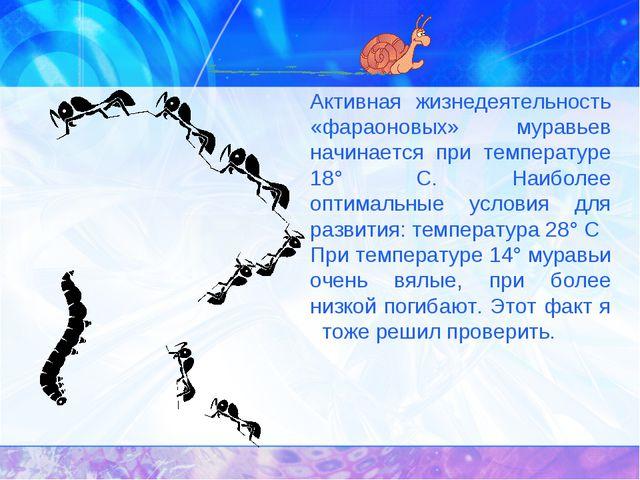 Активная жизнедеятельность «фараоновых» муравьев начинается при температуре...
