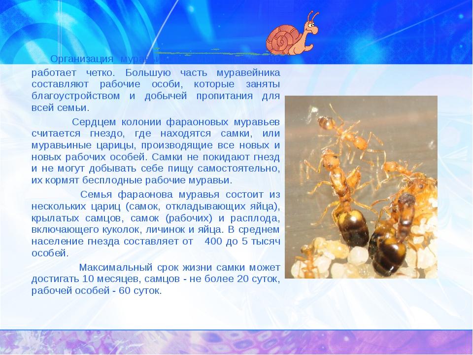Организация муравьиной семьи сложна, но работает четко. Большую часть мурав...