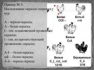 Пример № 3: Наследование окраски оперения у кур: А – черная окраска; А – бела