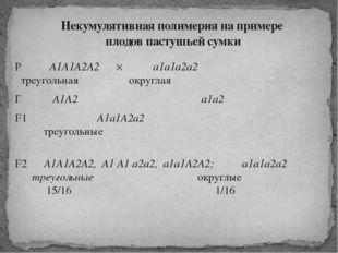 Р ♀ A1A1А2А2  ♂ a1a1а2а2 треугольная округлая Г A1А2 a1а2 F1 A1a1А2а2 треуго