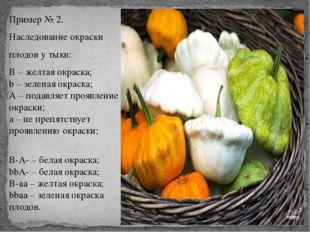 Пример № 2. Наследование окраски плодов у тыкв: В – желтая окраска; b – зелен