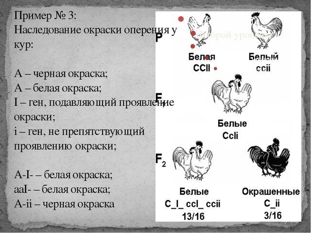 Пример № 3: Наследование окраски оперения у кур: А – черная окраска; А – бела...