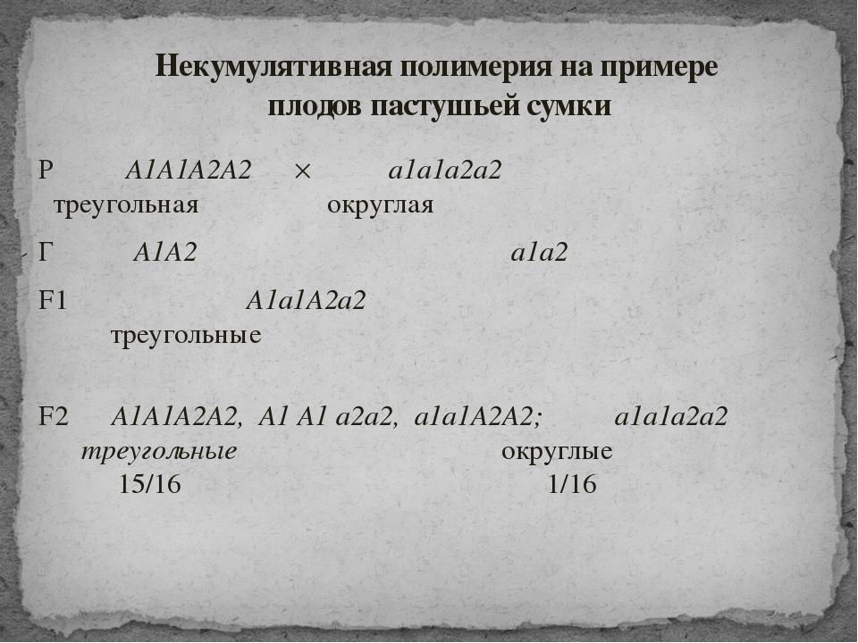 Р ♀ A1A1А2А2  ♂ a1a1а2а2 треугольная округлая Г A1А2 a1а2 F1 A1a1А2а2 треуго...