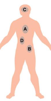 Diagram of human body