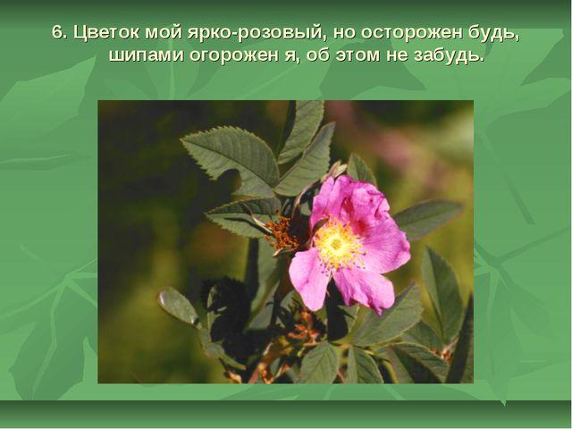 6. Цветок мой ярко-розовый, но осторожен будь, шипами огорожен я, об этом не...