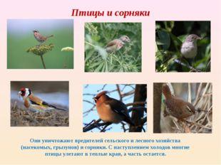 Птицы и сорняки Они уничтожают вредителей сельского и лесного хозяйства (насе