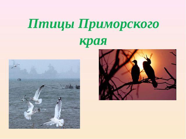 Птицы Приморского края