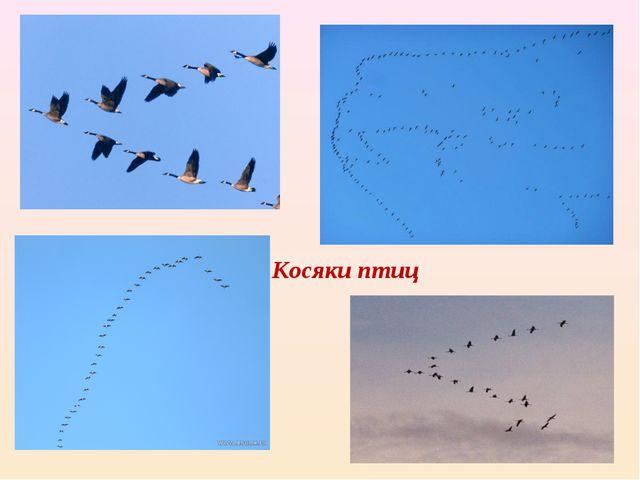 Косяки птиц - кося́к