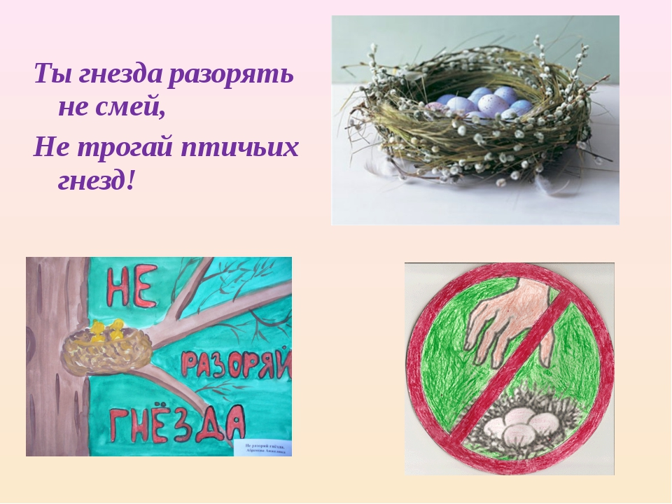 Ты гнезда разорять не смей, Не трогай птичьих гнезд!