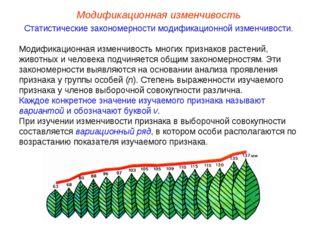 Модификационная изменчивость Статистические закономерности модификационной из