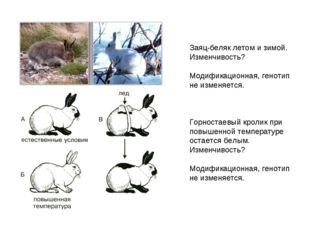 Заяц-беляк летом и зимой. Изменчивость? Модификационная, генотип не изменяетс