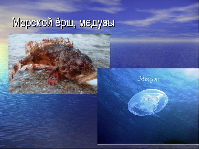 Морской ёрш, медузы