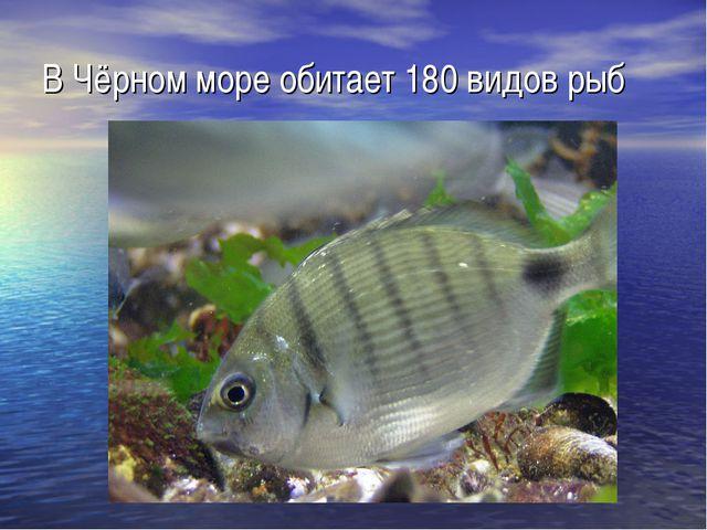 В Чёрном море обитает 180 видов рыб