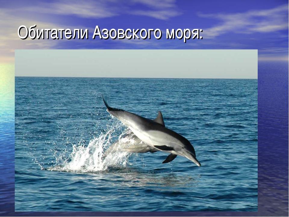Обитатели Азовского моря: