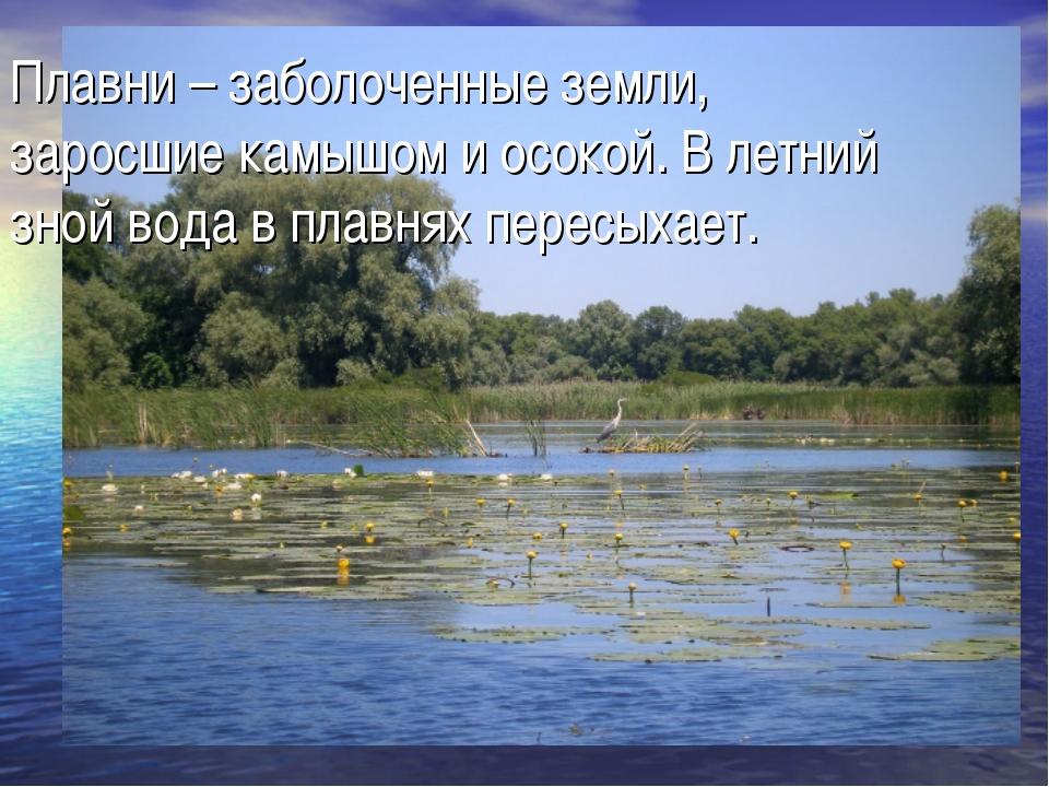 Плавни – заболоченные земли, заросшие камышом и осокой. В летний зной вода в...