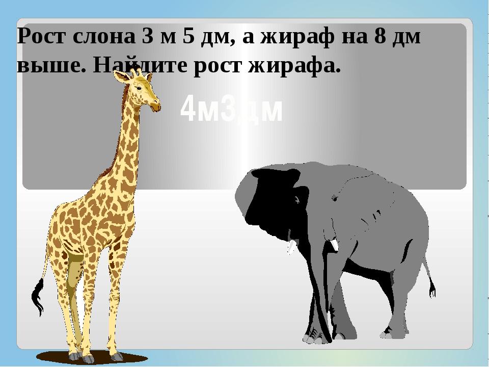 Рост слона 3 м 5 дм, а жираф на 8 дм выше. Найдите рост жирафа. 4м3дм