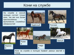 Кони на службе На службе в конной полиции состоят только кони, так как они бо