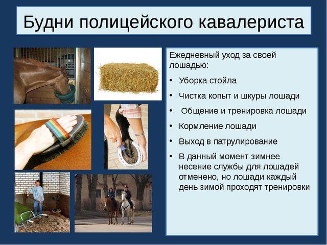 Будни полицейского кавалериста Ежедневный уход за своей лошадью: Уборка стойл...