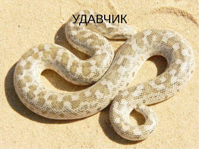 УДАВЧИК