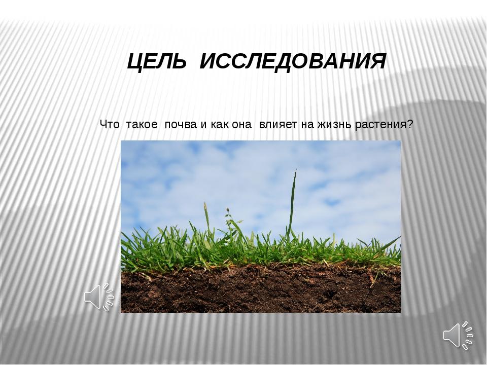 ЦЕЛЬ ИССЛЕДОВАНИЯ Что такое почва и как она влияет на жизнь растения?