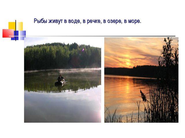 Рыбы живут в воде, в речке, в озере, в море.