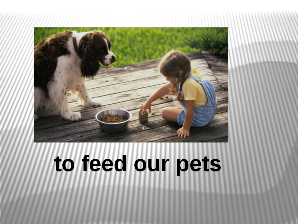 to feed our pets