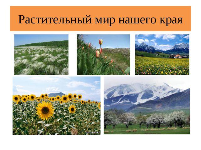Растительный мир нашего края