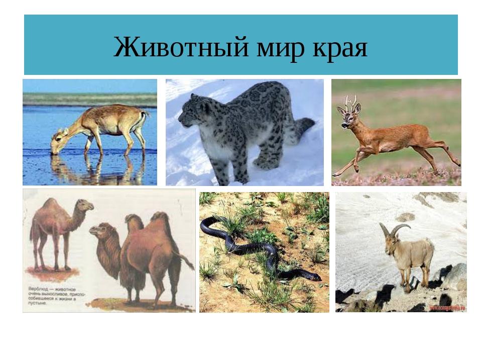 Животный мир края