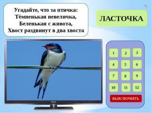 1 2 3 4 5 6 7 8 9 12 11 10 ВЫКЛЮЧИТЬ Птица с ярко-жёлтой грудкой, Чёрный вер