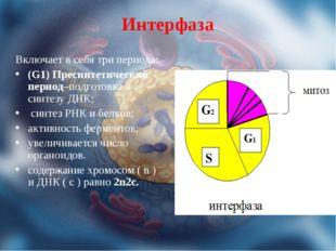 Интерфаза Включает в себя три периода: (G1) Пресинтетический период–подготовк