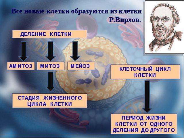 Все новые клетки образуются из клетки Р.Вирхов. ДЕЛЕНИЕ КЛЕТКИ АМИТОЗ МИТОЗ...