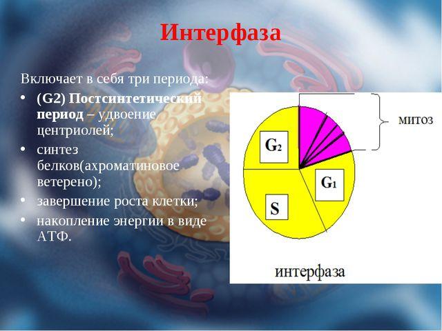 Интерфаза Включает в себя три периода: (G2) Постсинтетический период – удвоен...